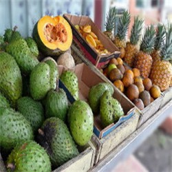 tropical-fruit-1a